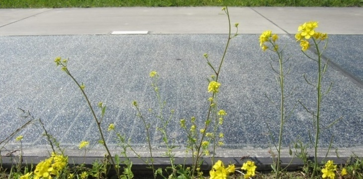 Picture of solar road